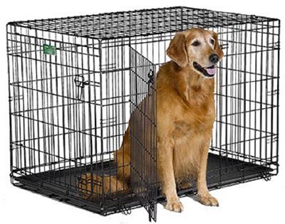 MidWest iCrate Dog Crate
