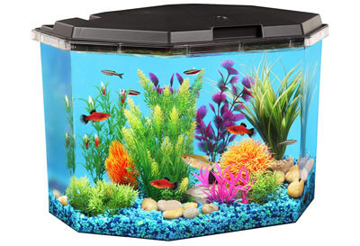 Top 10 Best Fish Tanks in 2019