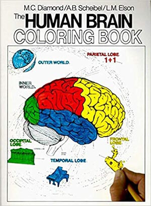 The Human Brain Coloring Book -1st Edition