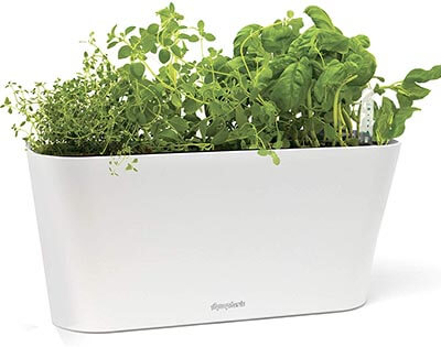 Aquaphoric Herb Garden Tub - Self Watering Passive Hydroponic Planter