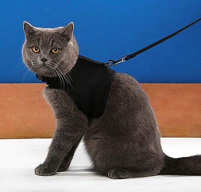 Niteangel Adjustable Cat Harness with Elastic Leash-2-Pack