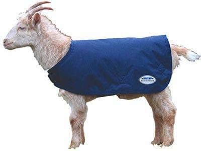 Weatherbeeta Goat Coat