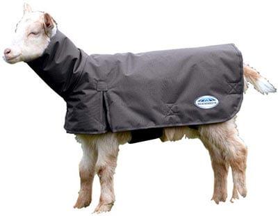 Weatherbeeta Goat Coat with Neck